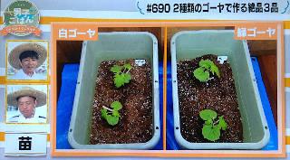 goya_growth1day_320.JPG
