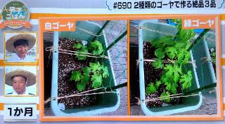 goya_growth1month_320.JPG