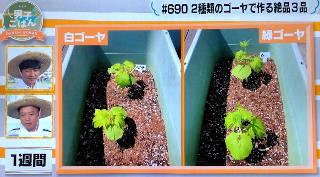 goya_growth1week_320.JPG