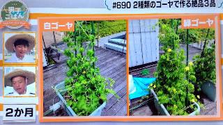 goya_growth2month_320.JPG