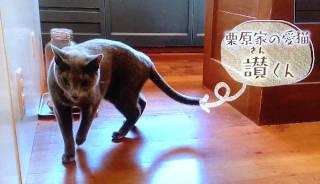sinpei_cat320.JPG